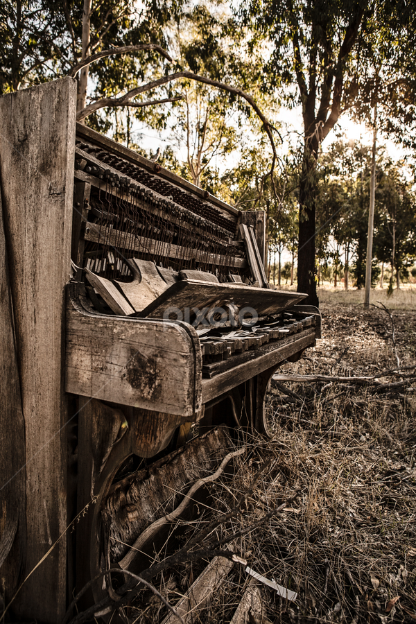 Broken Keys III by Dalibor Acimic - Artistic Objects Musical Instruments ( music, piano, wood, vintage, destroyed, vintage piano, old music, trees, old piano, rustic, music in the woods )