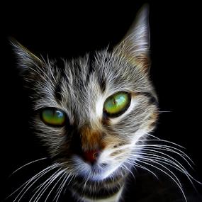 Smiljka by Srbx  Cicapo - Digital Art Animals ( redfield fractalius )