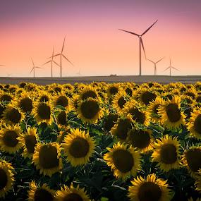 SUNset & SUNflower by Lupu Radu - Landscapes Prairies, Meadows & Fields ( windpower, sunset, sunflower,  )