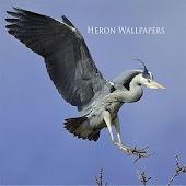 Heron Wallpapers