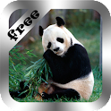 Cute Panda Live Wallpaper Free icon