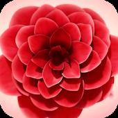 Flower Blossomed Live Wallpap