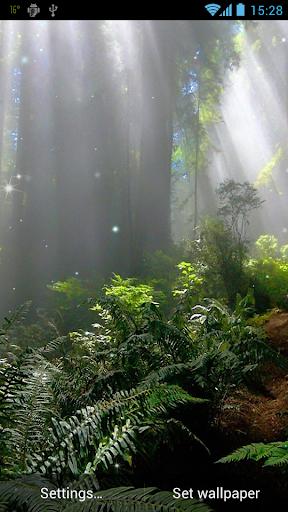 森林動態壁紙