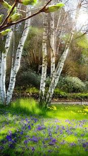 Zelené Jarní Živá Tapeta - náhled