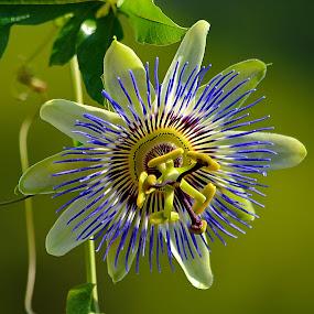 Rusty flower by Nikša Šapro - Flowers Single Flower (  )