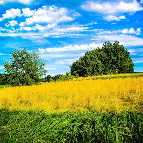 Wheat field and green grass  by Vladimir Krizan - Landscapes Prairies, Meadows & Fields