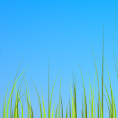 Grass live wallpaper