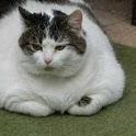 Fatty Katty Toss About logo