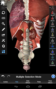 Essential Anatomy 3 v1.1.3