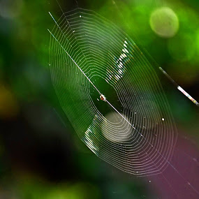 by Subramanya Padubidri - Nature Up Close Webs