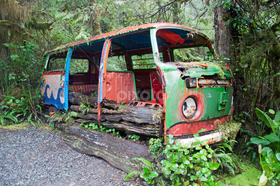 Retired  VW Van by Keith Sutherland - Transportation Automobiles ( vw, wild, van, restoration project, forest )