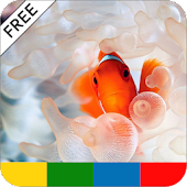 Tropical Fish Care Guide -FREE
