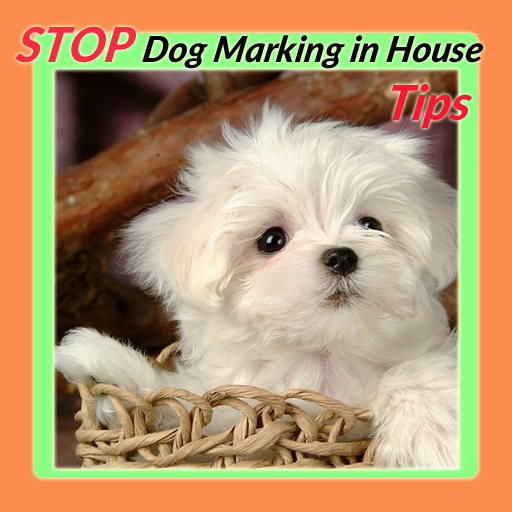 Stop Dog Marking in House Tips