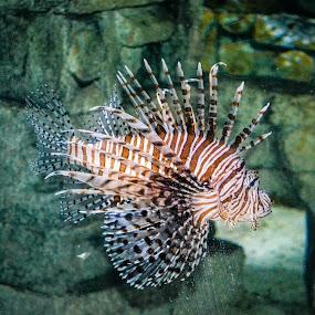 Audubon Aquarium 4 - NOLA by Gail Marsella - Animals Fish ( water, fish, aquarium, nola, sea, sea creatures, underwater life, ocean life )