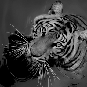 look at me with clear... by Ubayoedin As Syam - Black & White Animals ( black and white, animal )