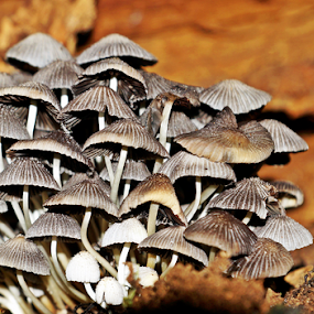 by Leon Neal - Nature Up Close Mushrooms & Fungi