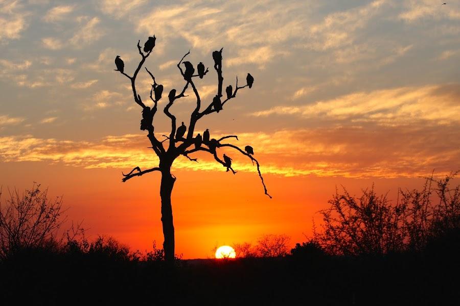 by Carel Stassen - Landscapes Sunsets & Sunrises