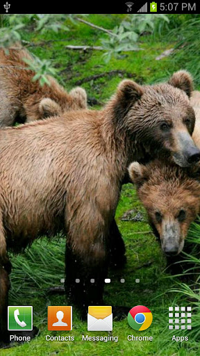 Katmai Bears for Jelly Bean