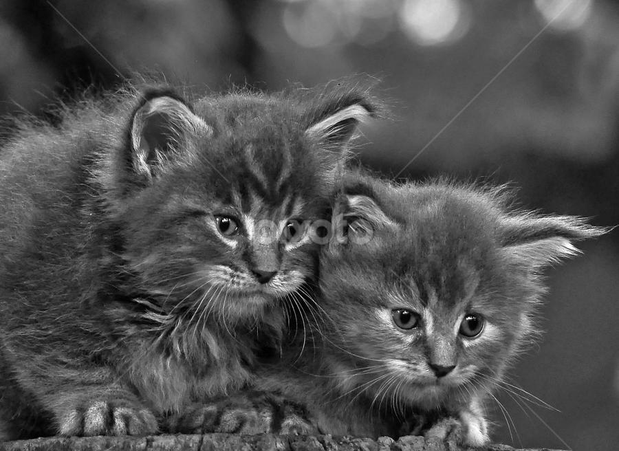 by Cacang Effendi - Black & White Animals