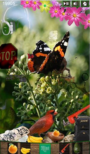 Hidden Object Sweet Butterfly