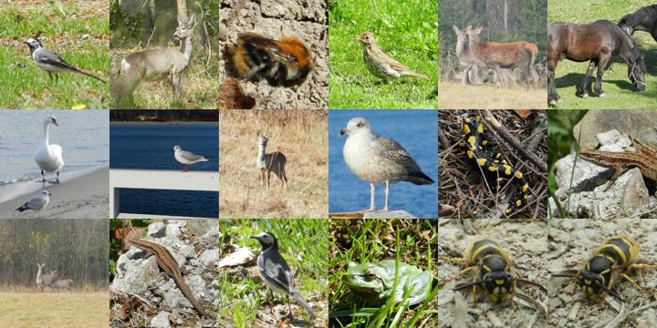 Tapety zwierzęta – zrzut ekranu