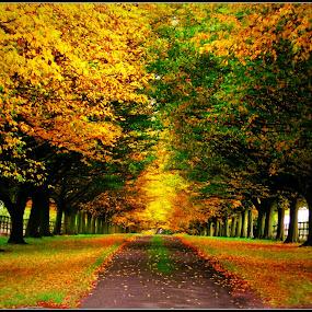 the avenue by David Walker - City,  Street & Park  City Parks ( trees )