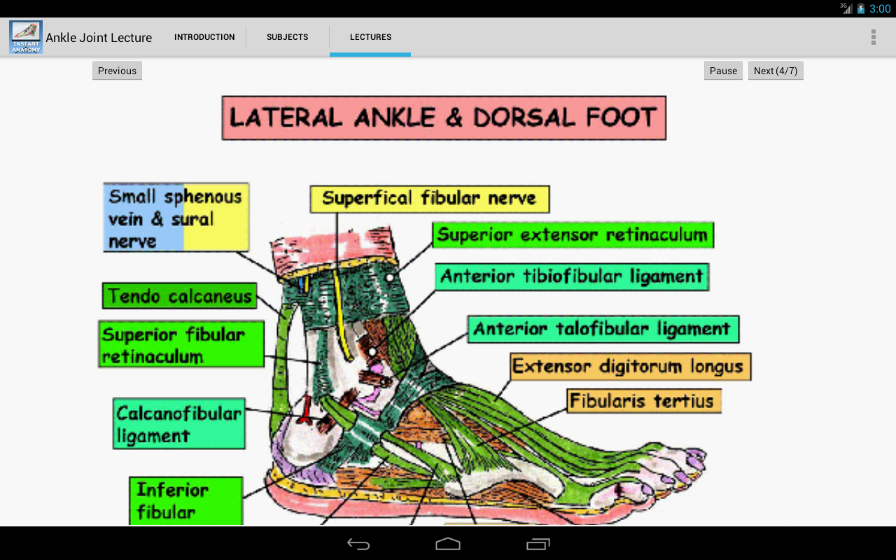 Anatomy of the Ankle Joint - screenshot