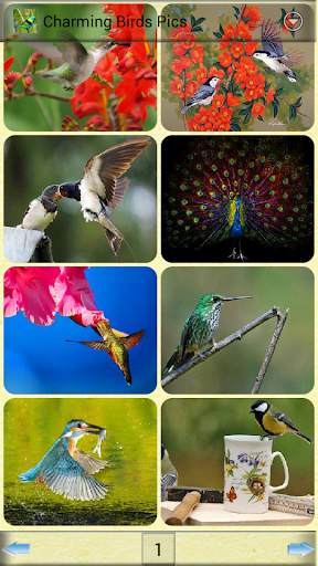 可愛的小鳥圖片