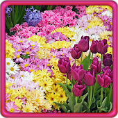Garden Flowers Live Wallpaper