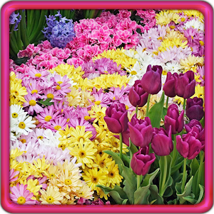 garden flowers live wallpaper - Garden Flowers