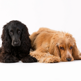 by Nikkojay Photography - Animals - Dogs Puppies (  )