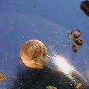 garden snail's