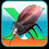 X-Beetle