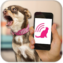 Dog Teaser icon