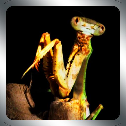 Praying Mantis Live Wallpaper LOGO-APP點子