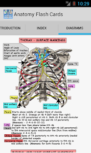 Anatomy Flash Cards - screenshot thumbnail