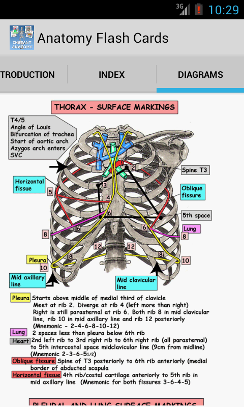Anatomy Flash Cards - screenshot
