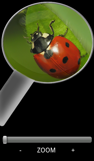 Magnifying Glass Free