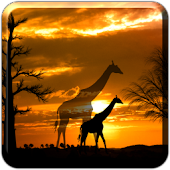 African Scene LITE