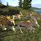 Gazelle Rampage 1.0 Apk