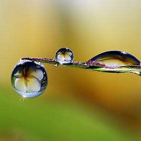 STARLIGHT by Dedy Haryanto - Nature Up Close Natural Waterdrops