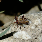 The Golden Egg Bug