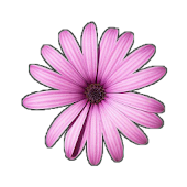 Pink Flower Live Wallpaper