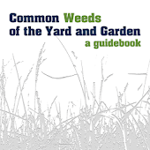 Common Weeds of Yard & Garden