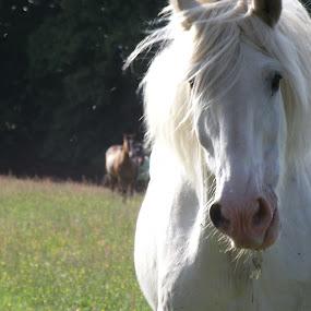 by Nicholas Thompson - Animals Horses
