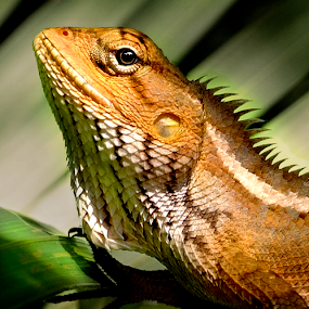Lizaed in the wild by William Cho - Animals Reptiles ( wild, lizard, reptile, garden, singapore )