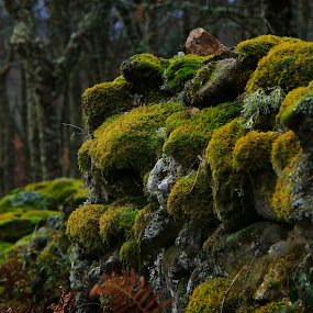 Crecimiento Exuberante by Miguel García - Landscapes Forests ( nature, paisaje, stone, forest, landscape, wall, green grass, naturaleza )
