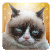 Grumpy Cat: Unimpressed