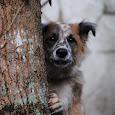 mission perro (dog)