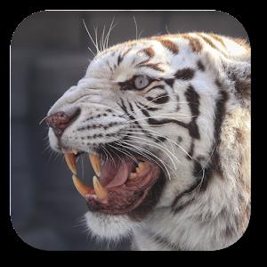 孟加拉虎動態桌布 個人化 App Store-愛順發玩APP